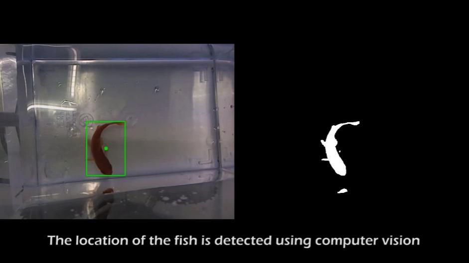 vissen1
